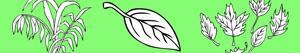 Colorear Plantas y Hojas